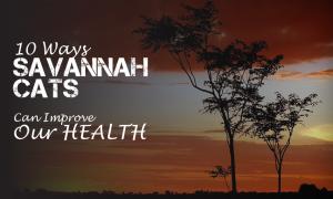 10 ways savannah cats make us healthier